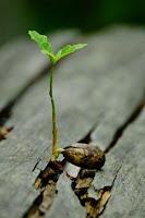biaya bibit tanaman, usaha bibit tanaman, bisnis bibit tanaman, bibit tanaman, usaha buah-buahan, rincian biaya modal usaha buah-buahan, bibit