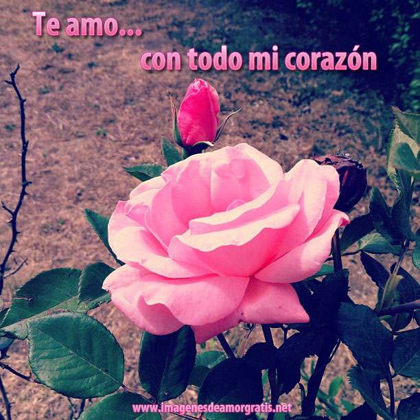 Imagenes De Amor Gratis Para Facebook Amor Paisa Amor
