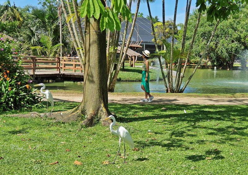 Belém do Pará viagem