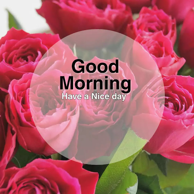 good morning flowers images for whatsapp