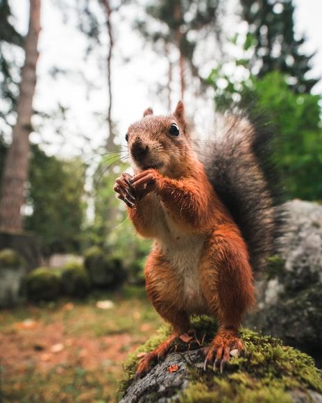HD beautiful pets pics, cute pets HD Photos