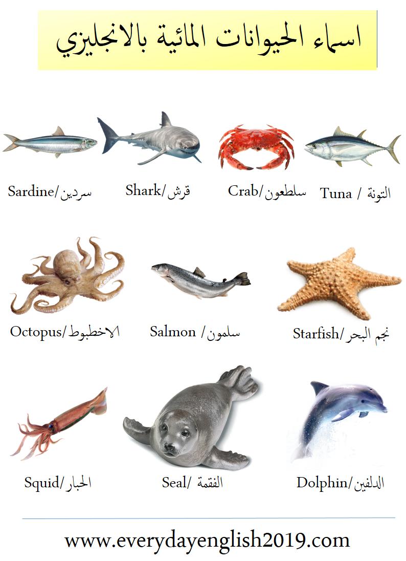 اسماء الحيوانات بالانجليزي -المائية-