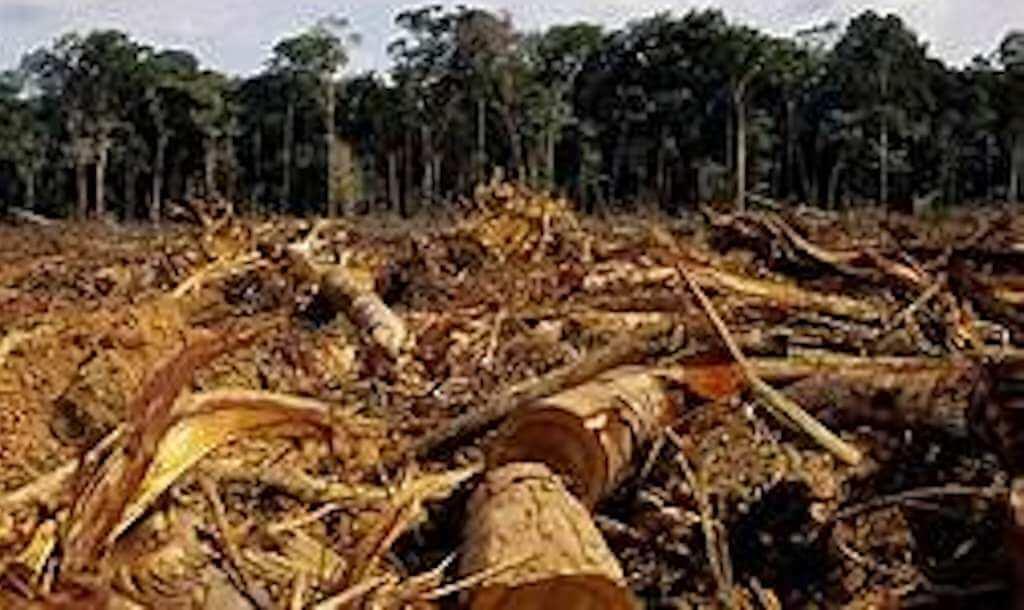 Krisis Ekologi Sebagai Dampak Kebiadapan Perilaku Manusia