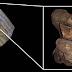 Pesquisadores encontram cérebro fossilizado de dinossauro pela primeira vez