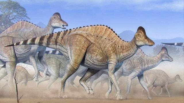 Hypacrosaurus Stebingeri/Reprodução