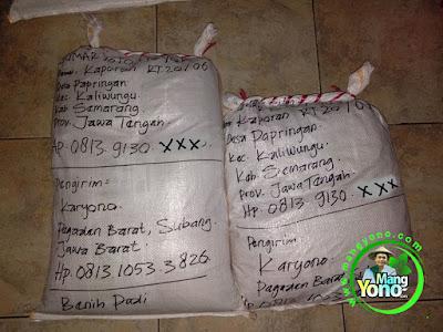 Packing benih padi pesanan SUMARYOTO Semarang, Jateng