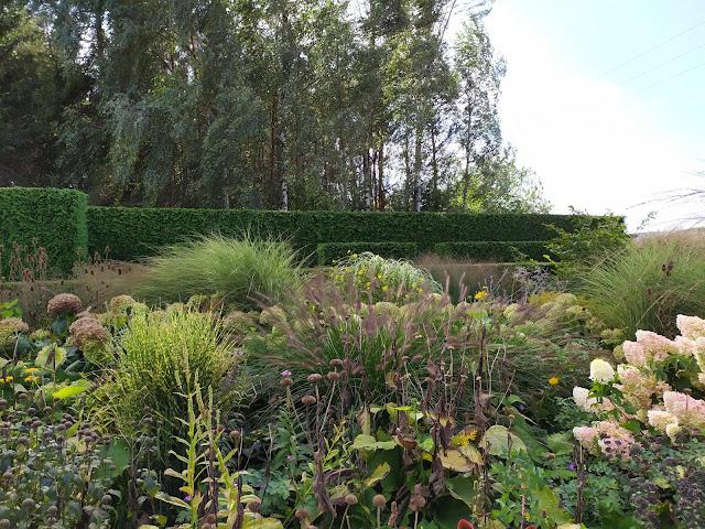 rabata bylinowa, trawy w ogrodzie, żywopłot formowany