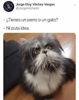 Perro que parece un gato o gato que parece un perro