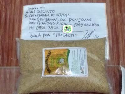 Benih pesanan AGUS SUSANTO Gunung Kidul, Yogyakarta..   (Sebelum Packing)