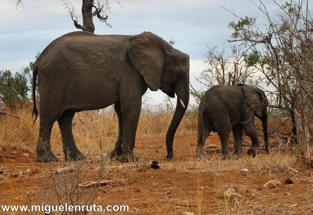 Elefantes-Berg-En-Dal-Kruger