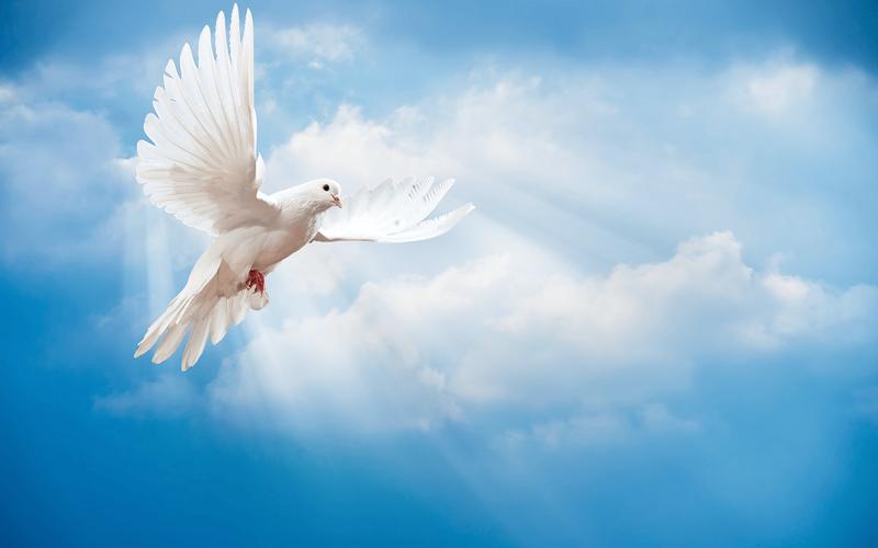 Müslümanlara ahirette bol nimetler verilecektir