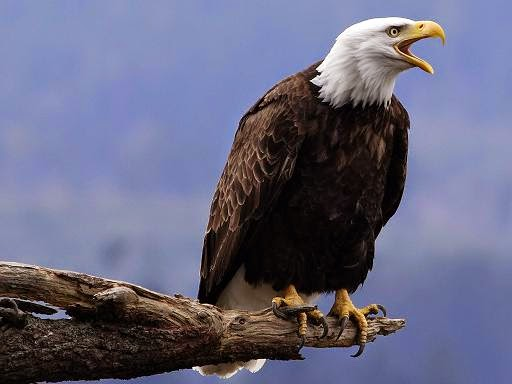 grito águia mp3 colocar celular