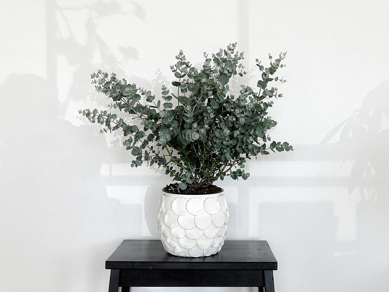 Eukalyptuspflanze für den Balkon im DIY gepimpten Übertopf als Lieblinge & Inspirationen der Woche | www.mammilade.blogspot.de