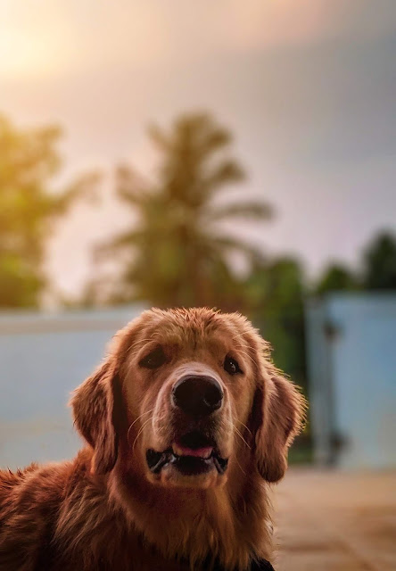 photos of cute dogs