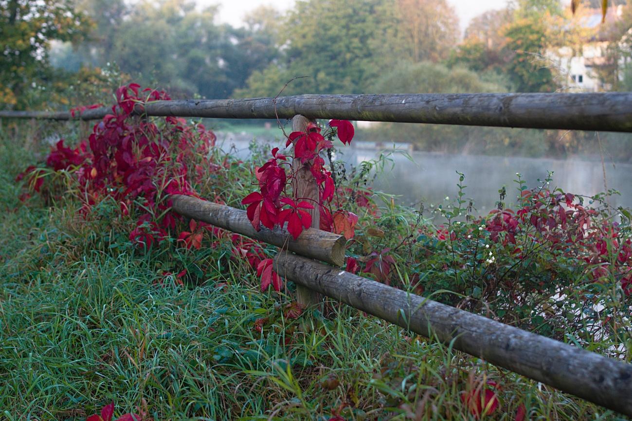 Zum Tagesabschluss — Etwas Herbstbuntes