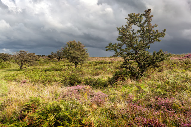 Exmoor National Park moorland with trees and heather
