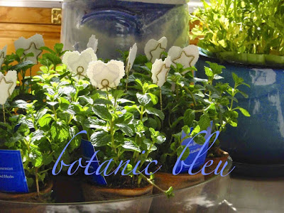 botanic-bleu-mint-plants-white-heart-picks