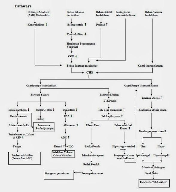 pathway gagal jantung kongestif atau CHF (congestive heart failure)