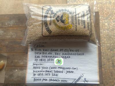 Benih padi yang dibeli    CASIM Indramayu, Jabar. (Sebelum packing karung ).
