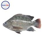 Ikan Nila Hitam 500 Gram