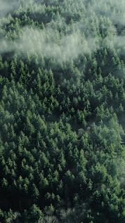 Trees Mobile HD Wallpaper