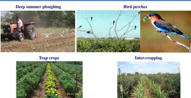 Tools methods employed in pest management