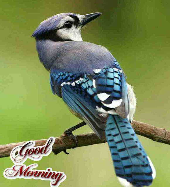 Awesome  good morning image with cute bird