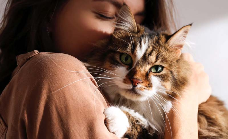 Why Does Your Cat Like to Rub Against You?