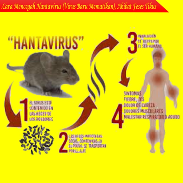 Cara Mencegah Hantavirus (Virus Baru Mematikan), Akibat Tikus