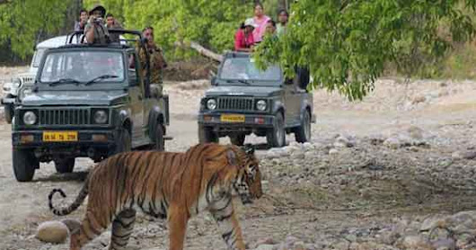 Jim Corbett National Park : A Perfect Wild Life Destination In India