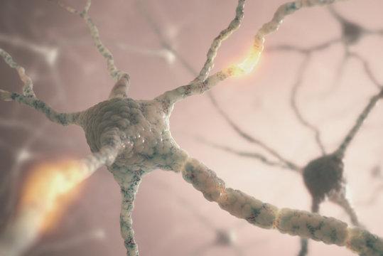 باحثون يصنعون أدمغة صغيرة في المختبر لدراسة الأمراض العصبية