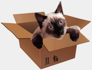 Gatto spedito per posta arriva vivo dopo 8 giorni