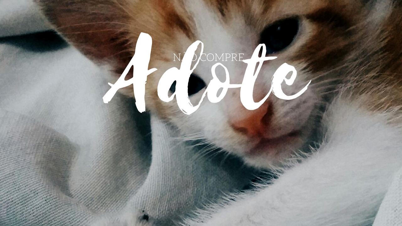 Não compre, adote | Blog Confident