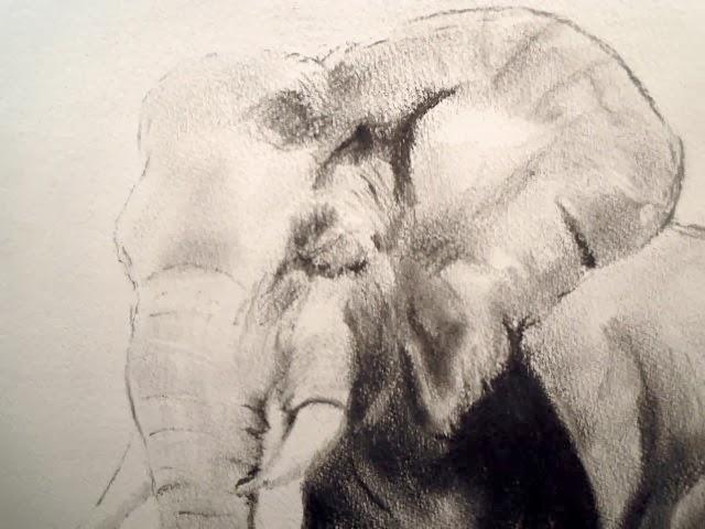 An Elephant a Day 2.0: Elephant No. 56: Black-and-White ...