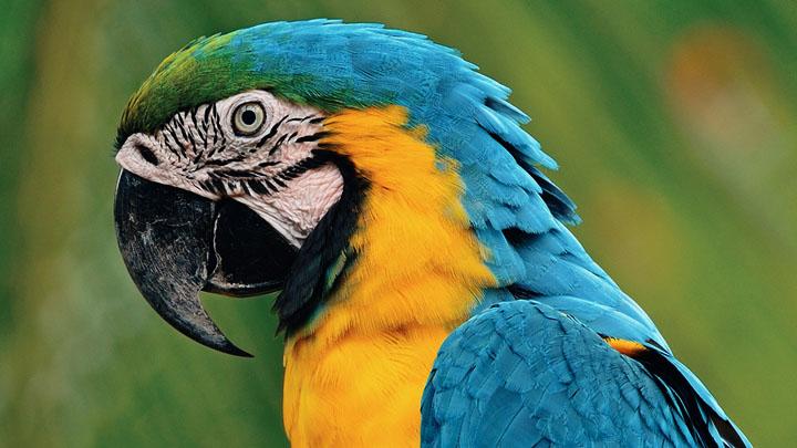 macaw-bird