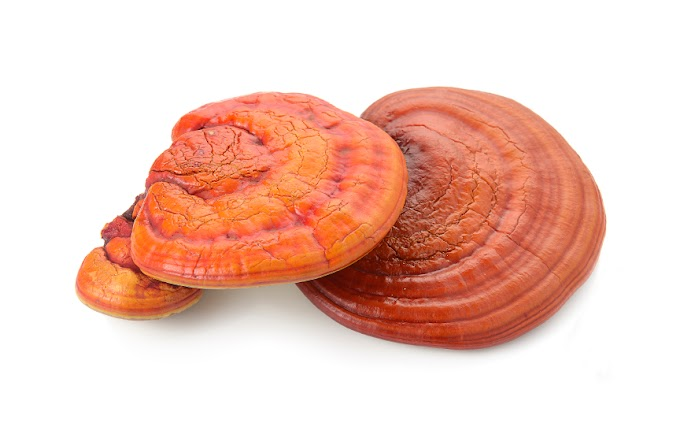 Reishi Mushroom Cultivation Training