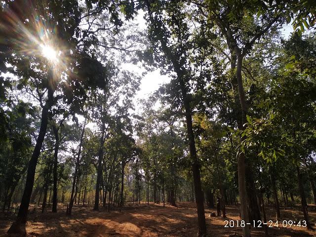 BANDHAVGARH TIGER RESERVE FOREST INSIDE
