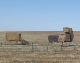 Lake Charm and their Cow hay bale Art