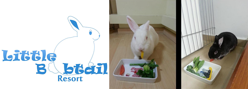 Hotels for Rabbits in Singapore