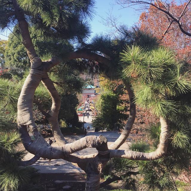 japan pretty trees