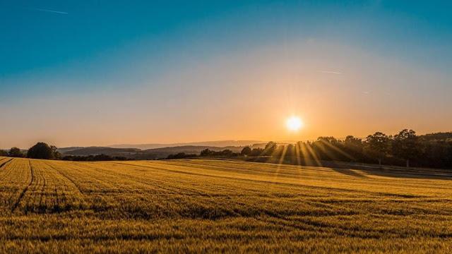 Після введення ринку землі вартість оренди гектара зросте вдвічі