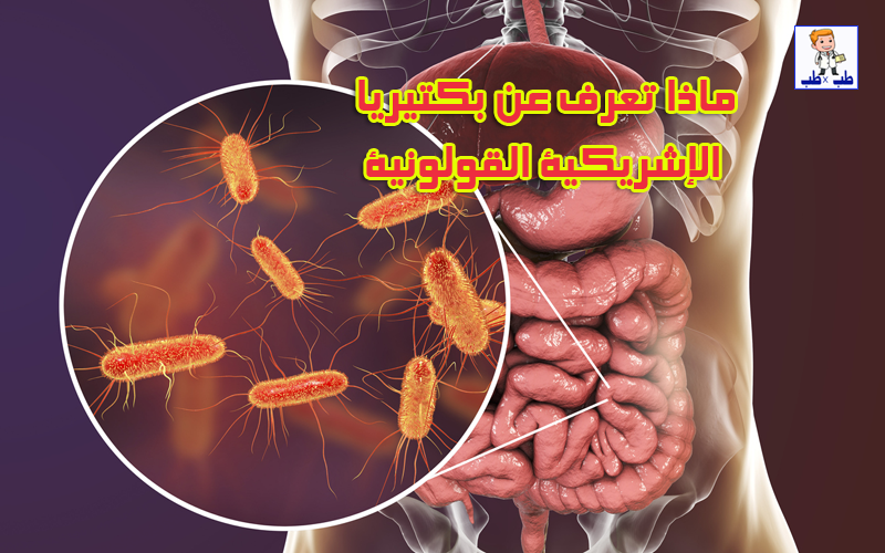 بكتيريا,الإشريكية القولونية,البكتيريا
