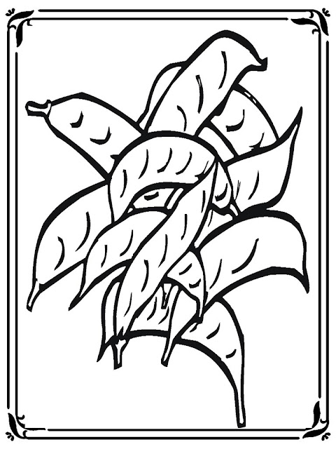 coloring pages of green peas