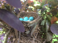 Robin's Beautiful Eggs