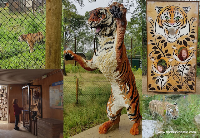 Knowsley Safari  Tigers photo opportunity LEGO and real tiger