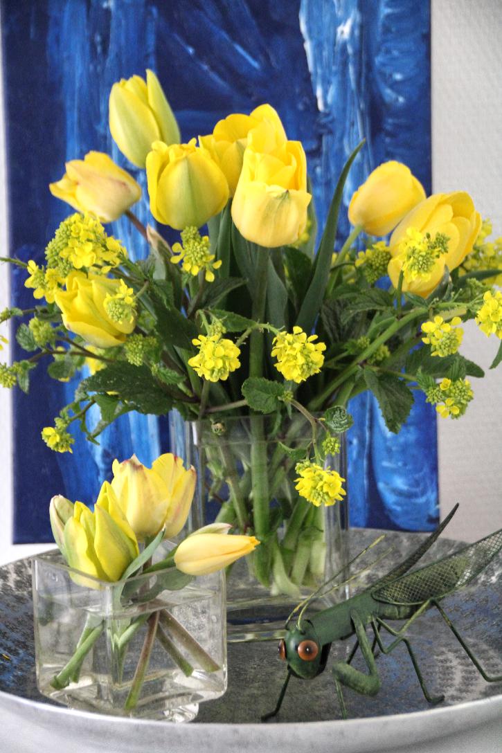Ackersenf Mit Tulpen