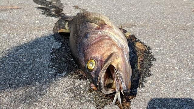 """ikan busuk dimulai dari kepalanya"""""""