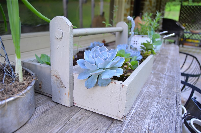 Succulent Nursery in Tool Box Stonecrest Herbary at A Nest for All Seasons