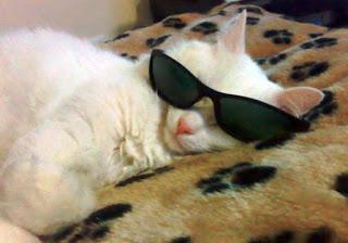 Gambar Kucing Tidur Pakai Kacamata Lucu Banget