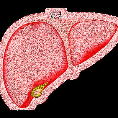 How_To_Reduce_Fatty_Liver